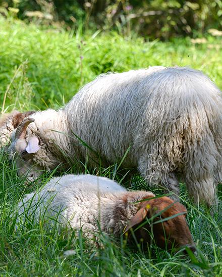 Schafwolle Isolierung